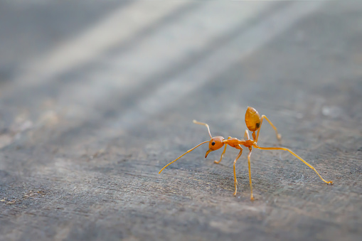 why insects hate everlast® epoxy floors in commercial kitchens