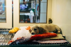 why to choose epoxy flooring for animal daycare centers